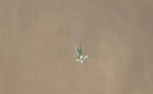 צונח מגובה 7,600 מ' - בלי מצנח. צפו: (צילום: MONDELEZ INTERNATIONAL)