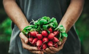 אוכל אורגני (צילום: mythja, Shutterstock)