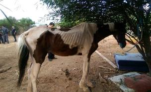 סוסים רזים (צילום: עיריית רמת גן)
