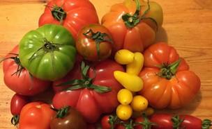 עגבניות בשוק האיכרים (צילום: גלעד ותמר צדיקפור, אוכל טוב)