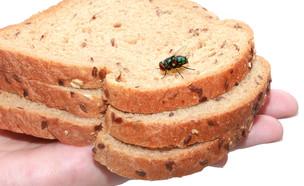 זבוב בלחם (צילום: Protasov AN, Shutterstock)