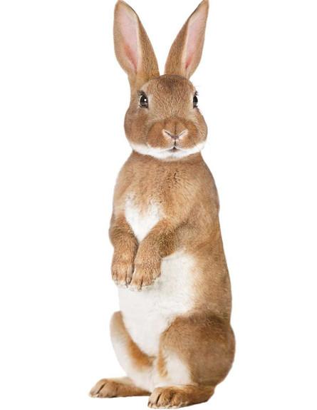 מדבקת ארנב, 12.9 יורו, להשיג ב-kek amsterdam