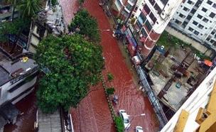 רחובות שוצפי דם בבנגלדש, השבוע (צילום: טוויטר)