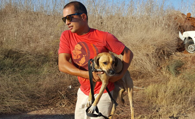 הכלבה מחולצת מהחוף, השבוע (צילום: אגודת צער בעלי חיים בישראל)