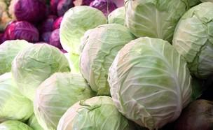כרובים ירוקים וסגולים (צילום: עודד קרני)