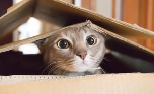 חתול (צילום: Shutterstock, מעריב לנוער)
