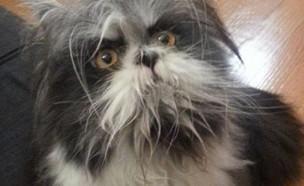 חתול או כלב (צילום: טוויטר)