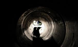 צפו בפינגווינים חוצים במנהרה (צילום: CNN)