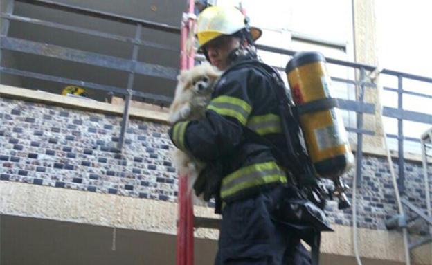 רגעי החילוץ (צילום: רשף/מ - מקסים אברג'יל)