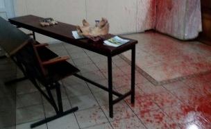 ראש חזיר באומן (צילום: חדשות 2)