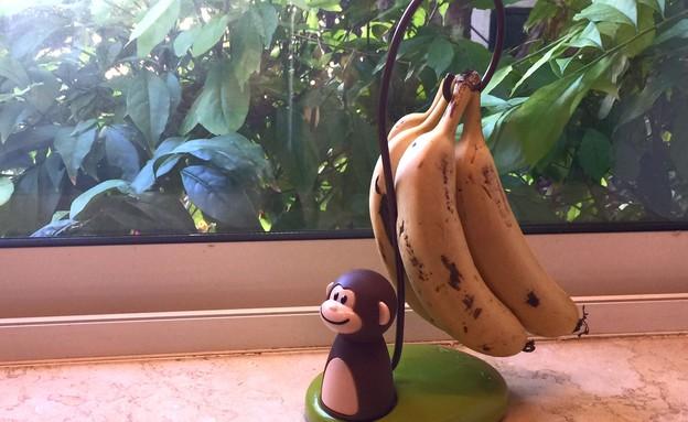 גאדג'טים להמונים - עץ בננות (צילום: בושי מרדור,  יחסי ציבור )