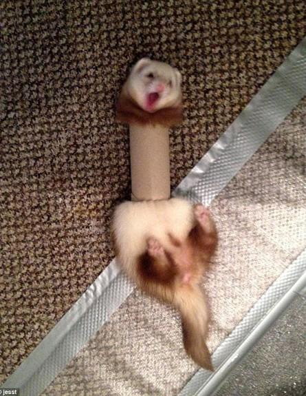 חיות כושלות (צילום: Bored Panda)