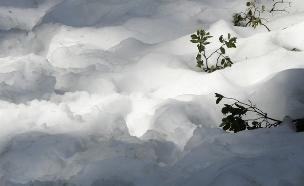 צפו: מעטה שלג בפארק יוסמיטי (צילום: רויטרס)