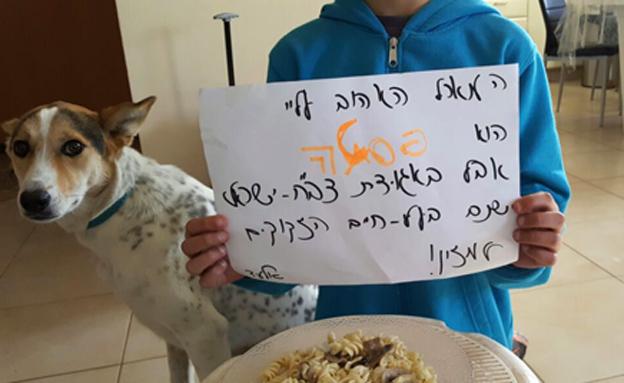 אלעד ואלפא (צילום: אגודת צער בעלי חיים)