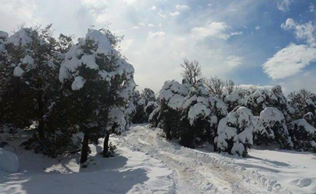 שלג קל בצפון בסוף השבוע (ארכיון) (צילום: עידן גולדווסר)