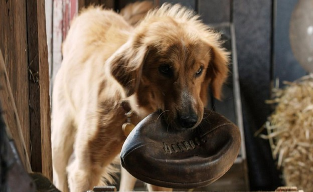 A Dog's Purpose (צילום:  none,  יחסי ציבור )