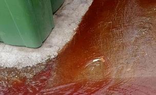 דם מציף את הרחוב