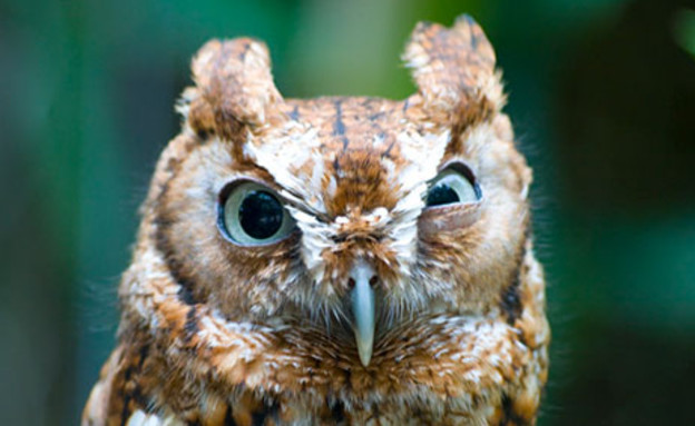 חיות כועסות (צילום: boredpanda, מעריב לנוער)