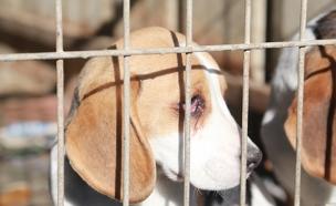 גם כלבים בריאים רבים מומתים (צילום: יואב בן-דב)