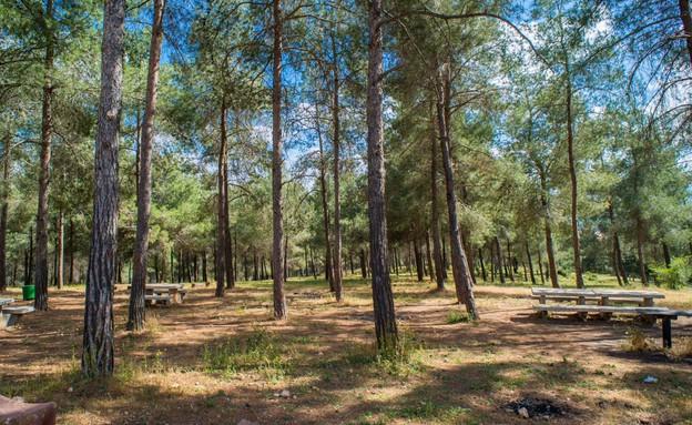 יער בלפור (צילום: סוכנות ג'יני)
