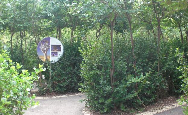 יער אילנות (צילום: קרן קיימת לישראל)