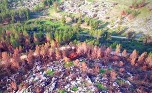 תיעוד: כך נראים היערות לאחר שריפות הענק (צילום: אייל בן-יעיש)