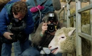 חייה ומותה של הכבשה המשוכפלת (צילום: רויטרס)