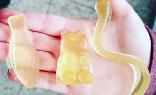 סוכריות ג'לי ביתיות (צילום: צילום ביתי, אוכל טוב)