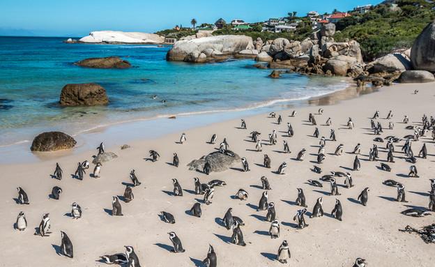 חוף בולדרס, קייפטאון (צילום:  Pocholo Calapre, Shutterstock)