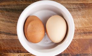 שתי ביצים (צילום: Shutterstock, מעריב לנוער)