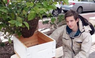 הכירו את גיבור העל של הדבורים (צילום: משק גרתי)