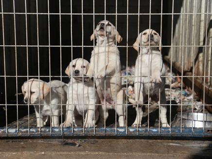 60 אלף כלבים מומתים מדי שנה