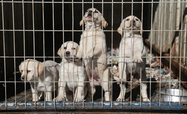 60 אלף כלבים מומתים מדי שנה (צילום: יואב בן-דב)