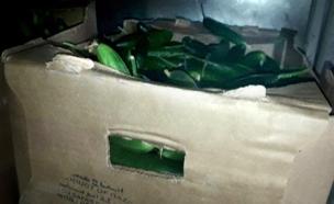 חשש: חיידקים וחומרים אסורים התגלו בסחורות (צילום: חדשות 2)