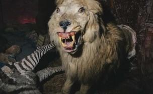 פוחלץ אריה בגן החיות בעזה (צילום: יוטיוב VICE)