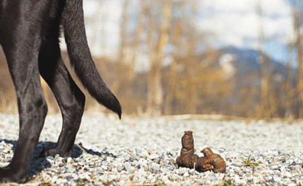 צואת כלב (צילום: Tinki.nl)