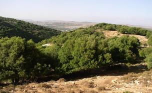 נחל מירון (צילום: איל שפירא, mako חופש)
