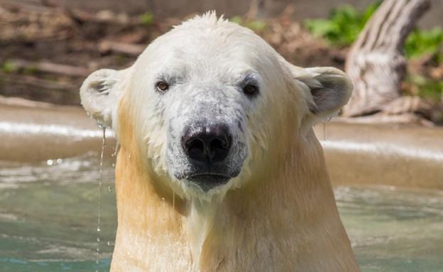 גני החיות של העתיד (צילום: STLzoo.com)