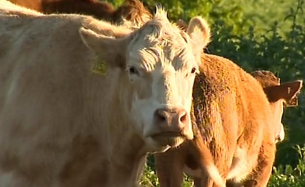 בדקנו: מדוע מחירי הבשר ממשיכים לעלות? (צילום: חדשות 2)