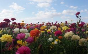 חג אביב שמח (צילום: רז רובין)