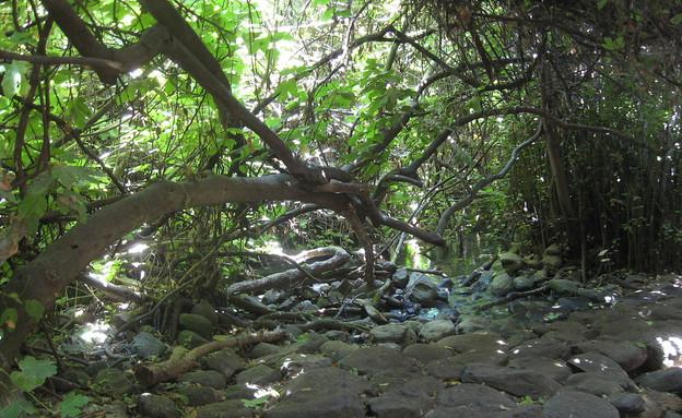 שמורת טבע תל דן (וידאו WMV: http://www.inature.info, Wikimedia)