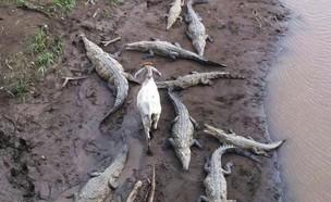 חיות חשות (צילום: Imgur)