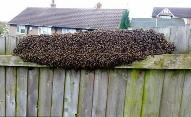 נחיל דבורים (צילום: יחסי ציבור)