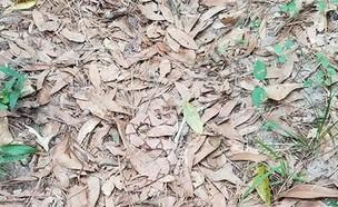 איפה הנחש (צילום: יחסי ציבור)