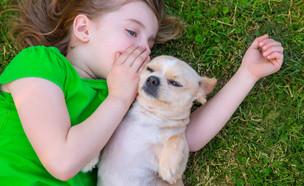 כלב  (צילום: Shutterstock)