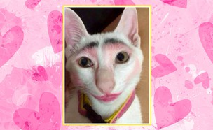 חתול מאופר (צילום: boredpanda, shutterstock)