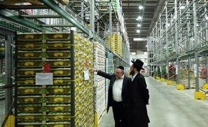 סיאוב וביורוקרטיה במערך הכשרות (צילום: פלאש 90 \ Yaakov Naumi)