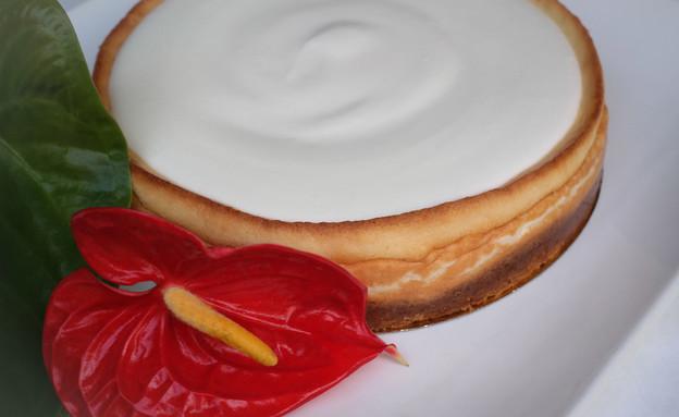 עוגת גבינה קלאסית, דלאל (צילום: מאיר כהן,  יחסי ציבור )