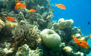 האלמוגים מאילת יצילו את העולם? (צילום: עינר ברזילי, חדשות 2)
