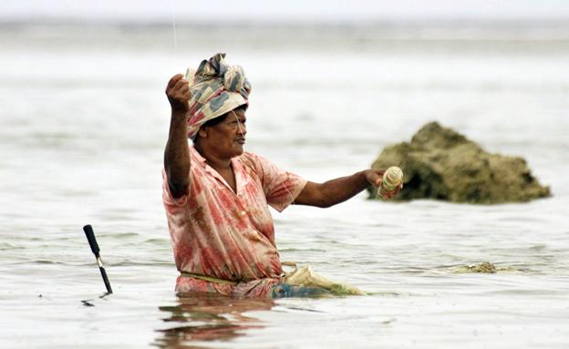 החיים בים בפיג'י (צילום: רויטרס)